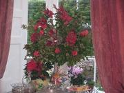 Christmas_flower